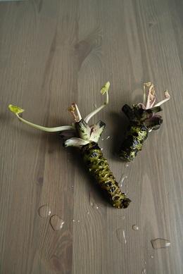 wasabi-pflanze-0051.jpg