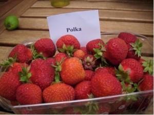 Erdbeere 2013 001