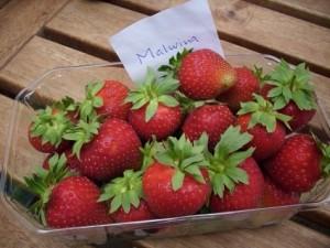 Erdbeere 2013 007